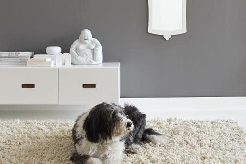 hund grå vägg
